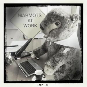 Marmot Arbeit Teaser