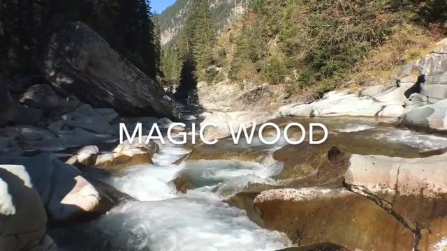 Magic Wood - Bouldern - Kletterszene - Video